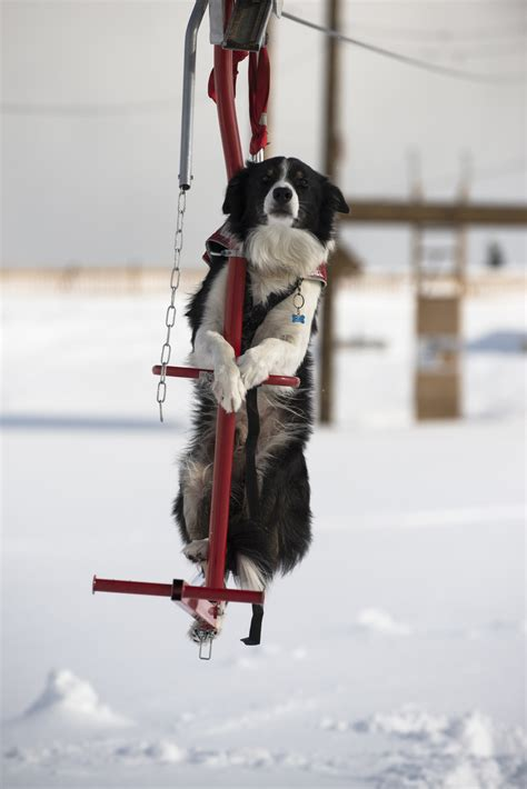 dogs on skis when an avalanche hits the slopes let the dogs out pittsburgh post gazette