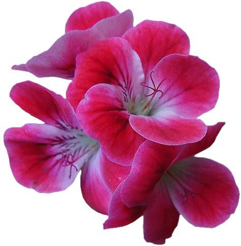 Imagenes De Flores Variadas | 174 colecci 243 n de gifs 174 im 193 genes de flores variadas
