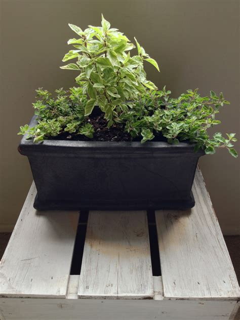 windowsill herb garden secrets to a thriving indoor herb garden