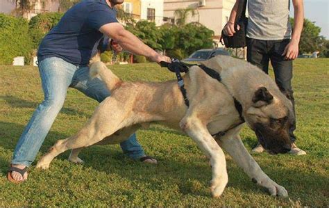 least aggressive breeds image gallery least aggressive breeds