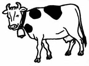 coloriage vache les beaux dessins de animaux 224 imprimer