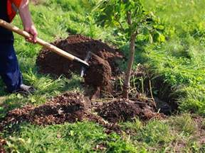 how to plant a tree saga