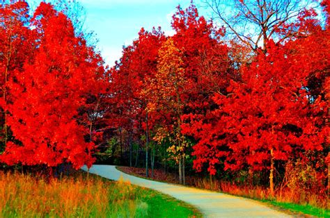 red orange nature www pixshark com images galleries