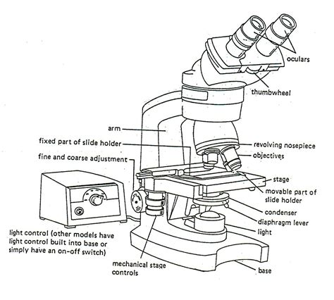 light microscope parts and functions diagrams of microscope printable diagram site