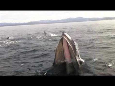 whale lands on boat whale lands on boat youtube