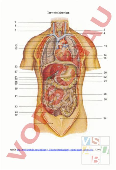 Best Places To Post Resume Online by Mensch Innere Organe Des Menschen Anatomie Organe Pictures