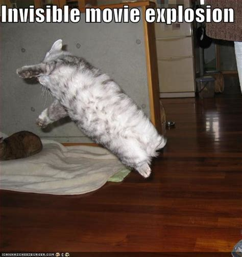 Invisible Cat Memes - lolcats cats and invisible objects amazing creatures