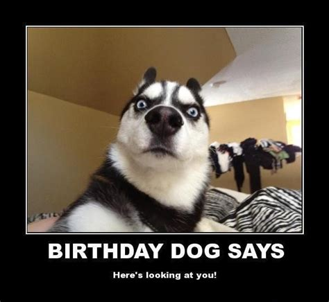 Happy Birthday Animal Meme - funny animal meme happy birthday