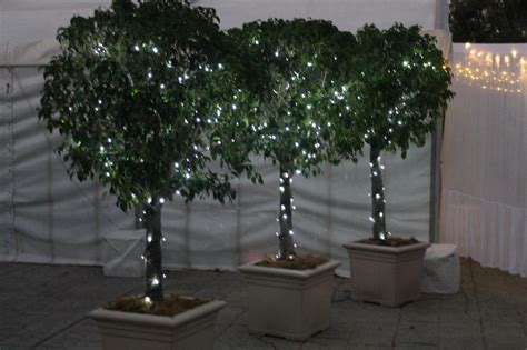 tree in lighted pot 1000 images about lit ficus tree project on trees silk plants and planters
