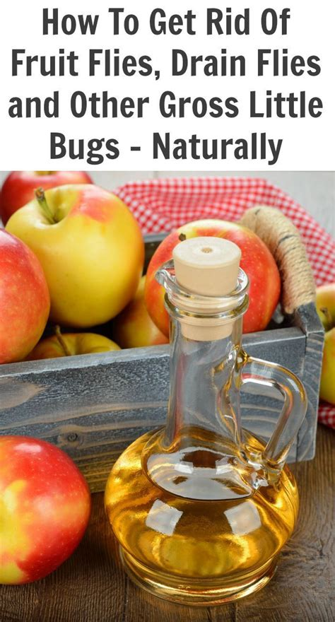 7 Ways To Get Rid Of Fruit Flies by 43 Best Images About Insect Repellent On
