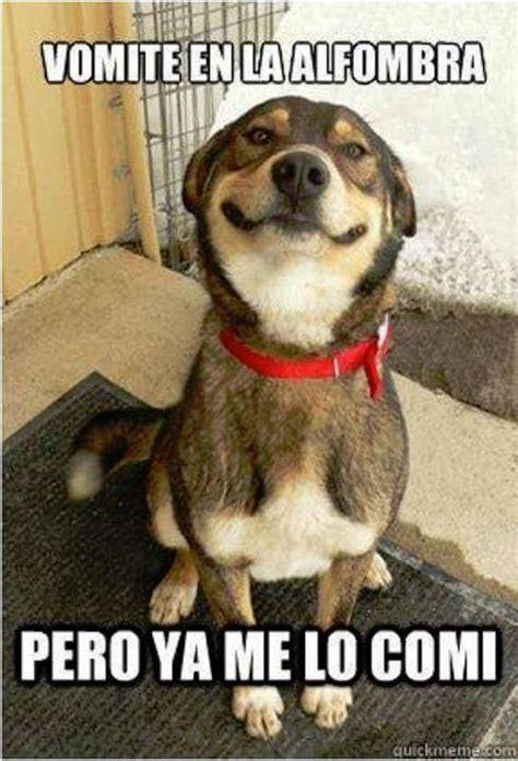 dedicale los mejores descargar imagenes graciosas gratis im 225 genes de risa con animales chistes de mascotas para