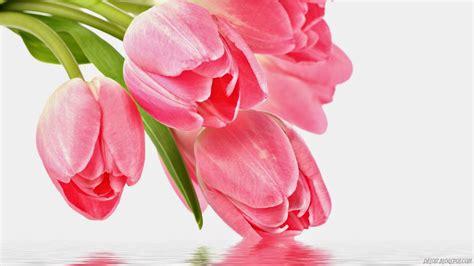 gambar animasi bunga sakura bergerak gif  images