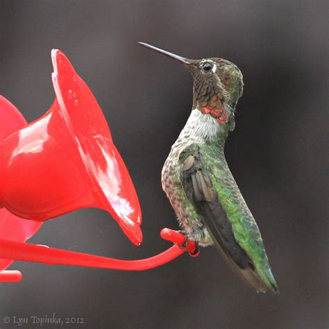 best 28 hummingbird feeder vancouver hummer high rise