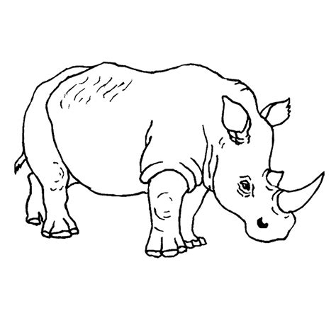 printable animal free printable rhinoceros coloring pages for kids