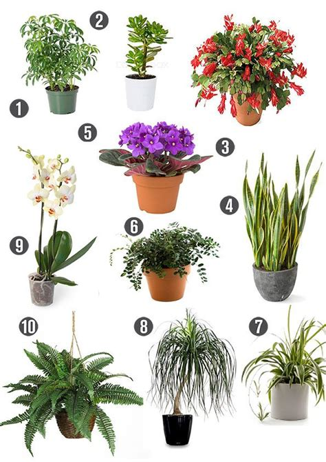 indoor plants for cats 1000 images about non toxic house plants children dogs