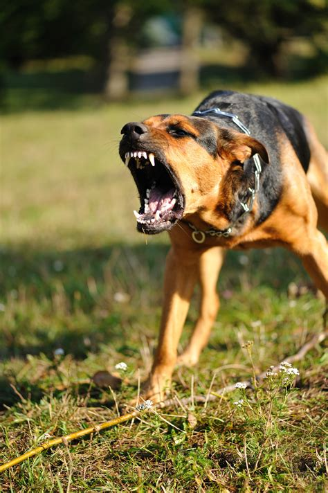 can dogs attacks dangerous dogs in your neighborhood here s how to find out