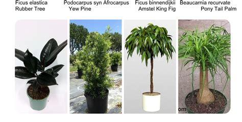 interiorscaping compendium indoor plant identification