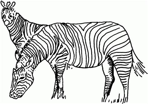 printable zebra pics printable zebra coloring pages for kids