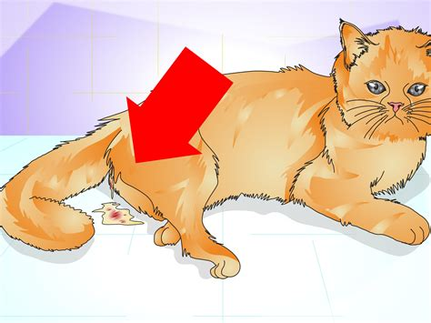 can you spay a in heat how to tell if a cat is spayed 12 steps with pictures wikihow