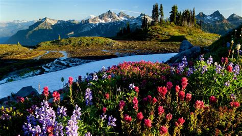 beautiful nature landscape in spring wallpapers and images amazing world photos