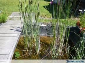 plante pour etang jardin diverses plantes pour bassin et 233 tang a vendre 2ememain be