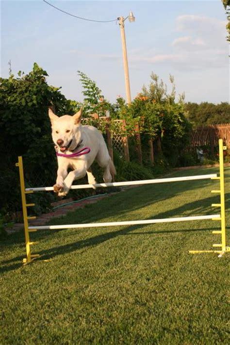 puppy obedience school rewards obedience school clovis nm 88101 505 763 9714