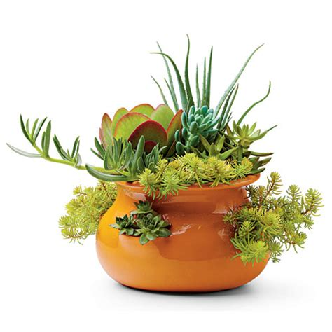 grow succulents in pots southern living