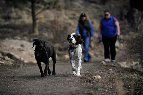 leash park denver evergreen park gets new leash to address safety issues the denver post