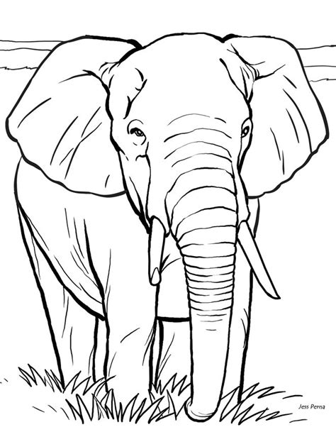Best 25 Animal Coloring Pages Ideas On Pinterest Adult Coloring Pages Free Printable Coloring Book Printing
