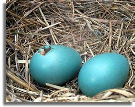birds hatching
