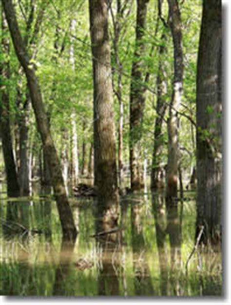 site characteristics central region bottomland - Which Feature Is Characteristic Of A Bottomland Hardwood Forest