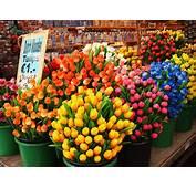 Flower Market In Amsterdam  Markets
