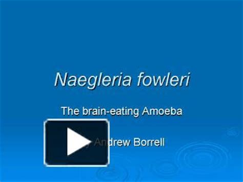 ppt perfumes powerpoint presentation free to view id ppt naegleria fowleri powerpoint presentation free to