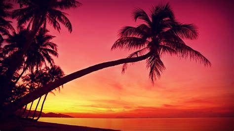 Set Mimi Lanscape Pink Gh palm tree sunset wallpaper 43 free modern palm tree