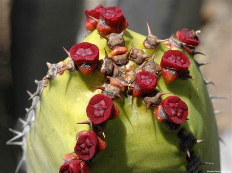 imagenes raras de rosas las 10 flores mas raras del mundo de los cactus y otras