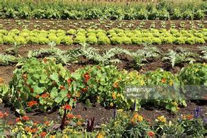 big vegetable garden big vegetable garden stock photo getty images