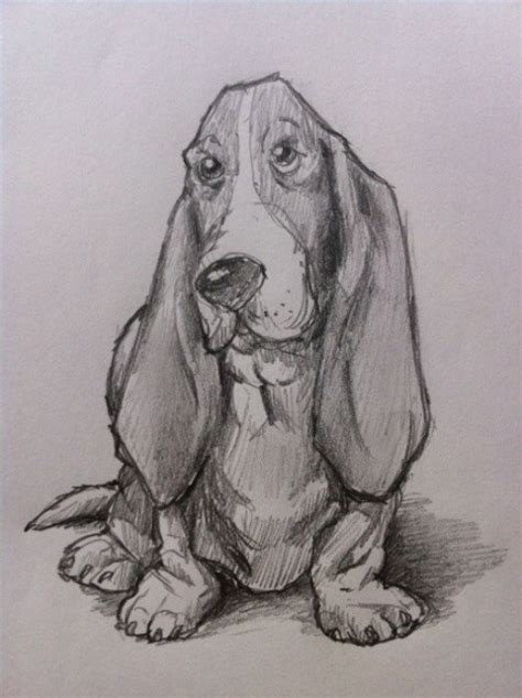 how to a hound how to draw a basset hound feltmagnet