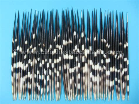 porcupine quills in porcupine quills and porcupine quills or porcupine quill bobbers or