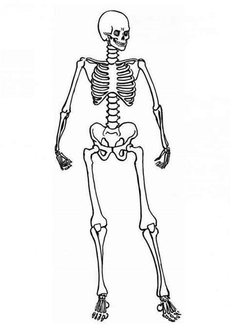 human skeleton coloring page hd m com