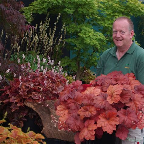 southern comfort heuchera heuchera southern comfort from the chelsea gold medal