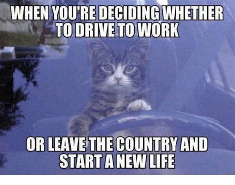 Working Cat Meme - 25 best memes about grumpy cat and work grumpy cat and