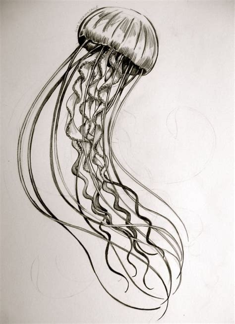 jellyfish tattoo design 25 best ideas about jellyfish on
