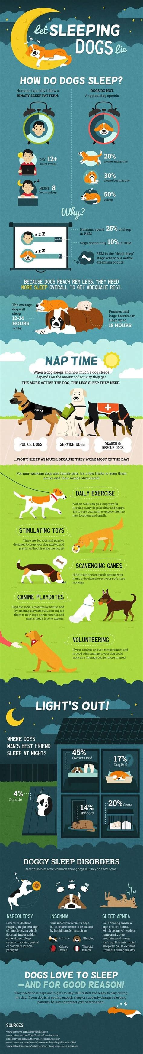 do dogs sleep how do dogs sleep infographic sles