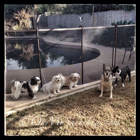 backyard pet pool fencing for dogs ensuring their safety omst