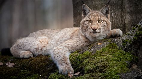a nature companion wildlife through the year books forest of the lynx episode nature pbs