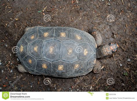 Turtle Top turtle top view royalty free stock photo image 23372705