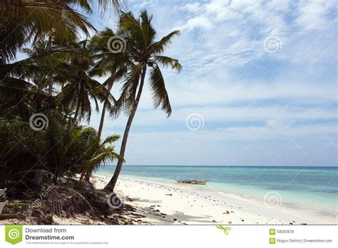 beautiful hawaiian shrub plants trinity by the sea beautiful coastline turquoise view of the sea with palm