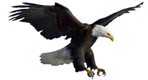 tutorial menggambar burung elang adaptasi morfologi fisiologi dan tingkah laku burung