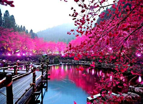 wallpaper flower full size beautiful tokyo sakura flower wallpaper desktop free