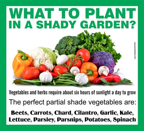 What Garden Vegetables Like Shade What To Plant In A Partial Shade Garden Us3